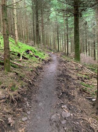 Wanderpfad auf dem Westweg bei Hausach im Schwarzwald