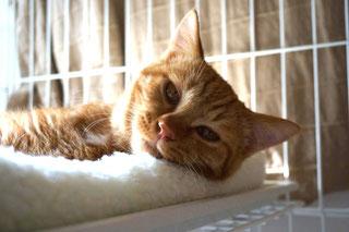 ネコトヒト,りう;猫と人,nekotohito,ネコトヒト