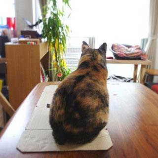 三毛猫しじみ;猫と人,nekotohito,ネコトヒト