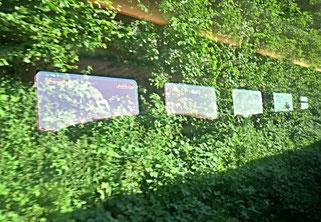 26. Juni 2016 - Der Sommer - am Fenster im Zug