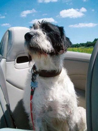 Merlin, der Superhund; ein Hund mit vielen Facetten
