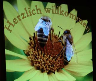Bienen in Schleswig-Holstein