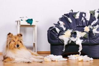 Hund verwüstet Wohnung