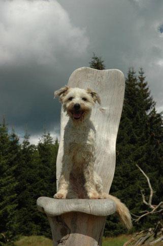 Fraser ein Hund der Hundeschule Bello Fantastico