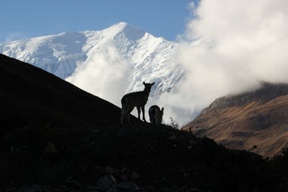 trekking sanctuaire des annapurnas