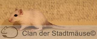 Eine helle Maus ist bei einem hellen Hintergrund schlecht zu erkennen.