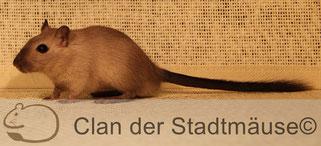 Hier stimmt der Hintergrund, er bildet einen guten Kontrast zur Farbe der Maus.