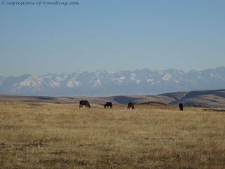 Abschied von den Bergen Zentralasiens