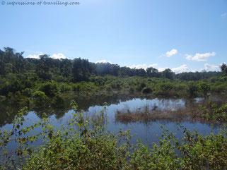 Dschungel von Kambodscha