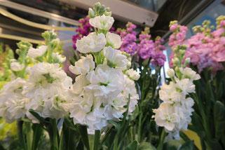 ヤマキ花卉園のストック