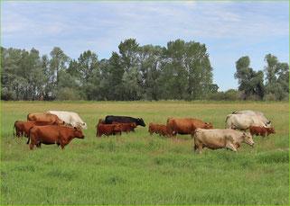 Mein BioRind | Kuh-Patenschaft