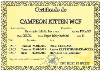 champion kitten wcf manekineko bengal