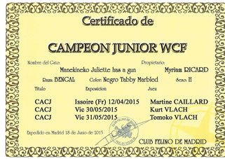 campeon junior wcf manekineko bengal