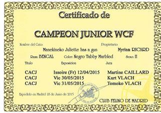champion junior wcf manekineko bengal