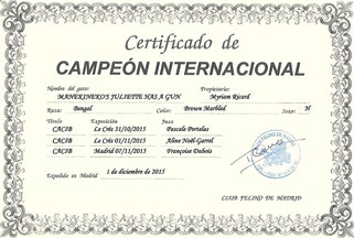 championne internationale manekineko bengal