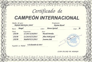 Campeon internacional Tribal'Bengal Jimy