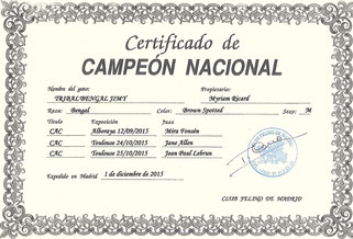 Campeon Tribal'Bengal Jimy