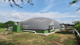 Biogas biodigestor en matadero de reses - aprovechamiento de rumen para produccion de biogas - rumen biodigestor - rumen electricidad