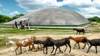 Matadero Camaguey - biodigestor - aqualimpia engineering - biogas - frigorifico reses