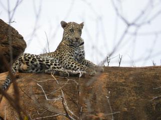 Safaris Kenia in den Tsavo