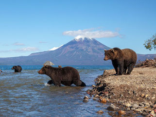 Kurilskoe Lake, bears catching salmon