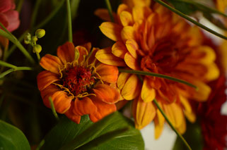 in a vase on monday, monday vase, desert garden, small sunny garden, amy myers, photographer, photography, zinnia