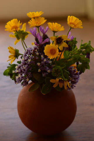 small sunny garden, desert garden, monday vase, in a vase on monday, iavom, photography, amy myers, ceramics, pottery, calendula, lavender, madrid, tetraneuris, cerinthe