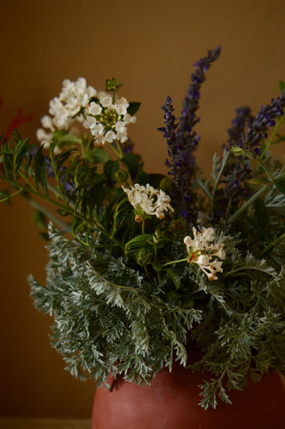 small sunny garden, desert garden, in a vase on monday, iavom, amy myers, photography, artemisia