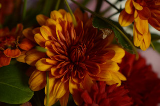 in a vase on monday, monday vase, desert garden, small sunny garden, amy myers, photographer, photography, chrysanthemum