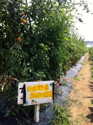 飯嶋農園 日本野菜ソムリエ協会