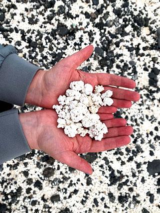 Popcorn Playa