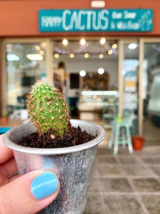 happy cactus in El Cotillo