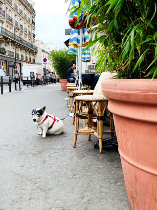 dog in front of café