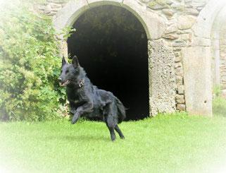 Burgwächter Yama