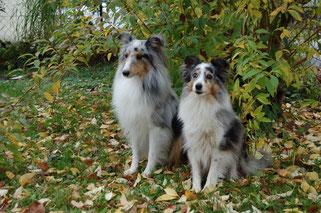 Lion (knapp 4 Jahre), Belle (11 Jahre)