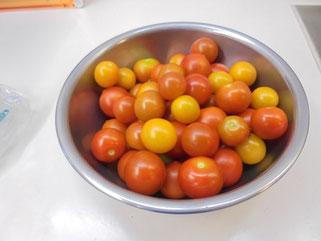 収穫した個性派ぞろいのミニトマト