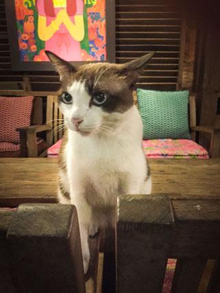 Katzenbesuch im Samsara