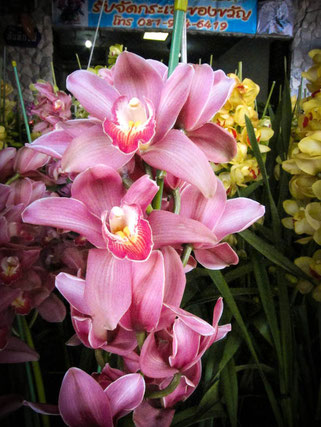 siam orchid market
