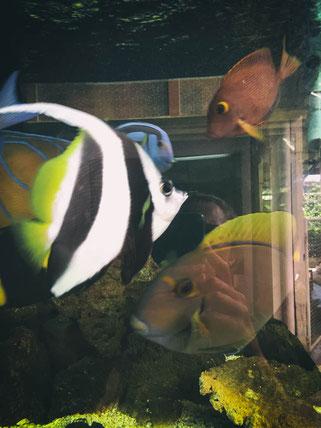 das aquarium im kleinen foyer