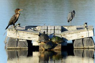 Six Mile Cypress Slough Preserve