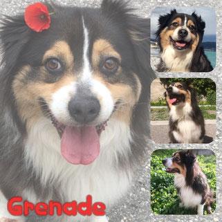 GRENADE adoptée en Novembre 2018