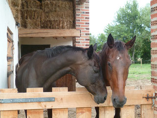 Accueil cavalier au Gîte Le Rouch-Tarn