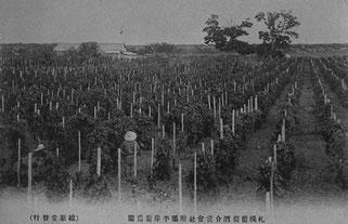 大正はじめごろの平岸葡萄園(北大北方資料室蔵)