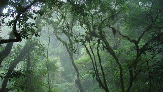 Arenal & Monteverde Package