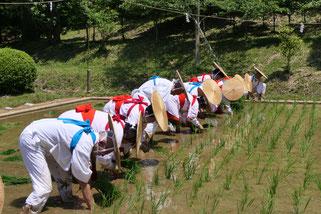 御田植祭(6月)