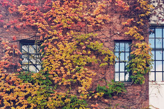 Natureinthecity; LocalLoves; Herbst in Hamburg; Hamburger Herbst; Herbst in Altona; #autumnisokay; Hamburg; Nature in the city; Local Loves; live4happiness2day; bloggingforinspiration