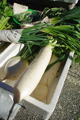 世田谷の地野菜「大蔵大根」もありました。「青首ではない」のが見た目的な特徴です。平賀さんち、いろんな野菜がありますね