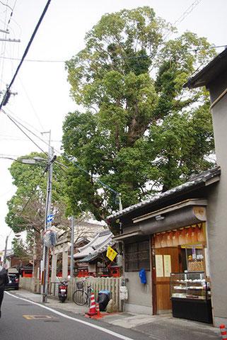 神社の大きな木の下に大福屋さんがあったり・・・