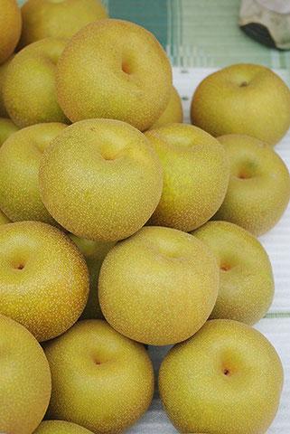 梨が好物の私。いすみ市岬町の梨「幸水」をひと山いただきました