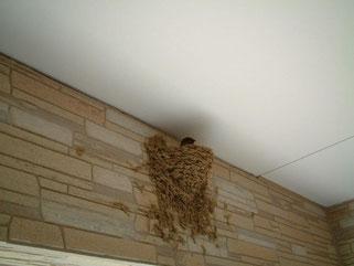 燕です。あっという巣を間に作りましたね。